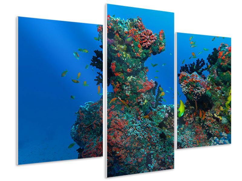 Hartschaumbild 3-teilig modern Die Welt der Fische