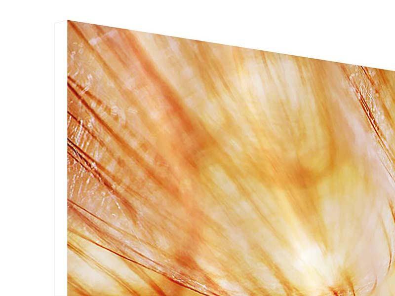 Hartschaumbild 3-teilig modern Close Up Pusteblume im Licht