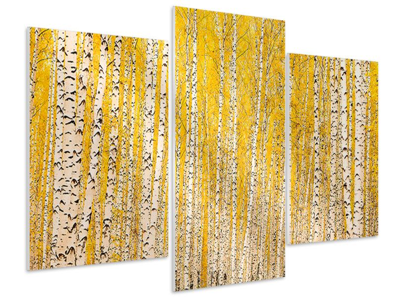 Hartschaumbild 3-teilig modern Der Birkenwald im Herbst