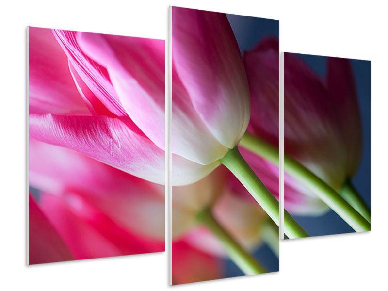 Hartschaumbild 3-teilig modern Makro Tulpen