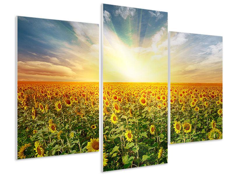 Hartschaumbild 3-teilig modern Ein Feld voller Sonnenblumen