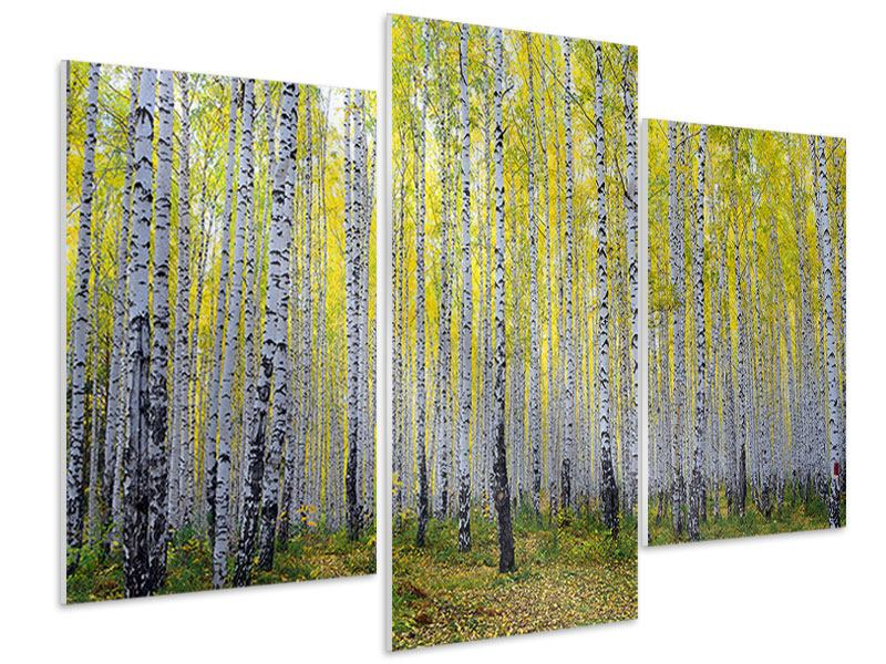 Hartschaumbild 3-teilig modern Herbstlicher Birkenwald