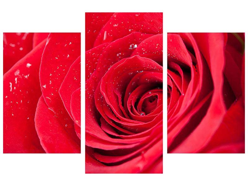 Hartschaumbild 3-teilig modern Rote Rose im Morgentau