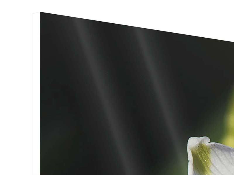 Hartschaumbild 3-teilig modern Schneeglöckchen XXL