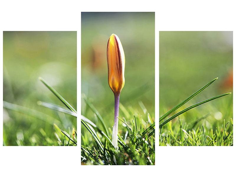Hartschaumbild 3-teilig modern Die Blütenknospe