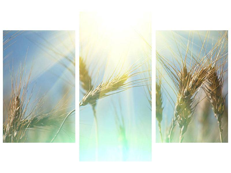 Hartschaumbild 3-teilig modern König des Getreides