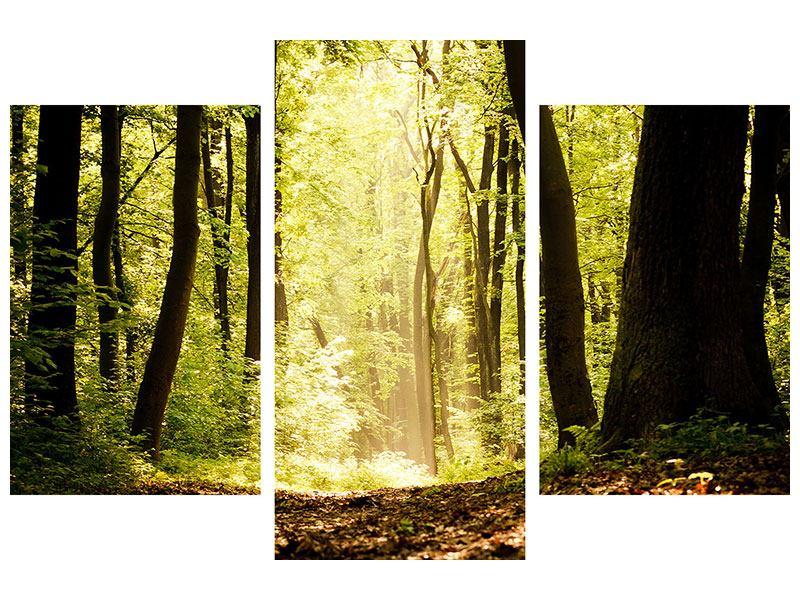 Hartschaumbild 3-teilig modern Sonnenaufgang im Wald