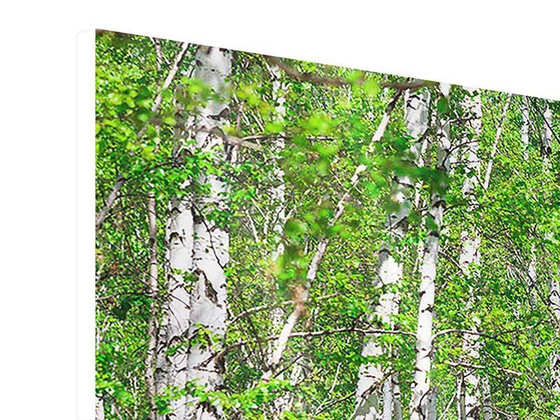 Hartschaumbild 3-teilig modern Der Birkenwald