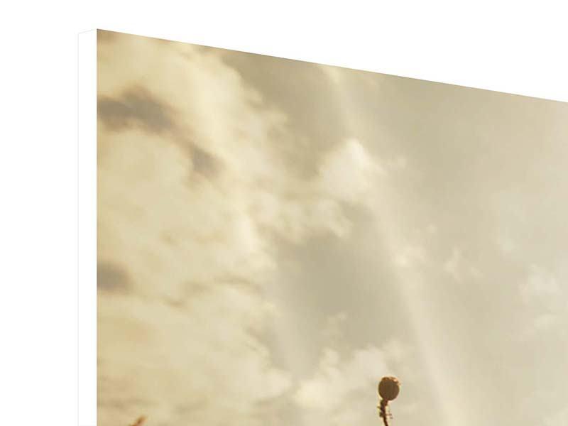 Hartschaumbild 3-teilig modern Das Mohnfeld bei Sonnenaufgang