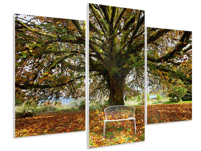 Hartschaumbild 3-teilig modern Mein Lieblingsbaum