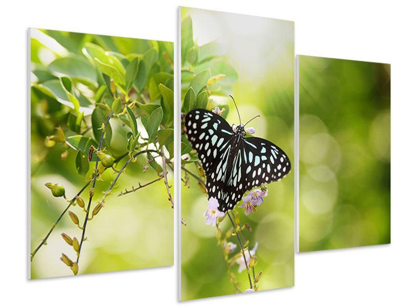 Hartschaumbild 3-teilig modern Papilio Schmetterling XXL