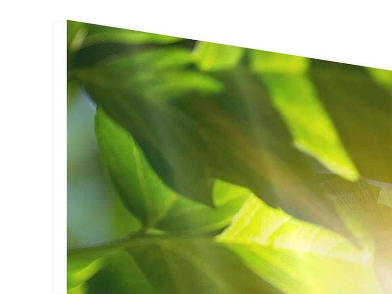 Hartschaumbild 3-teilig modern Es grünt so grün