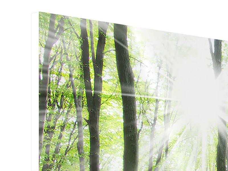 Hartschaumbild 3-teilig modern Magisches Licht in den Bäumen