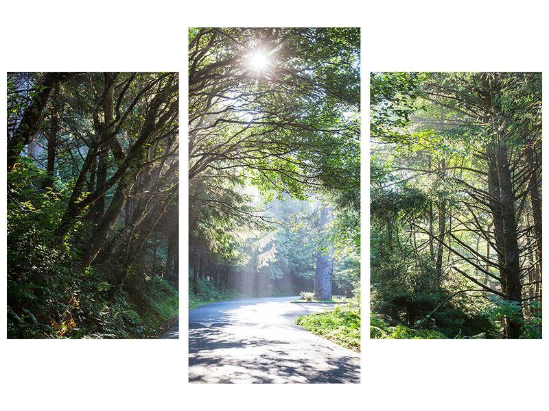 Hartschaumbild 3-teilig modern Sonniger Waldweg