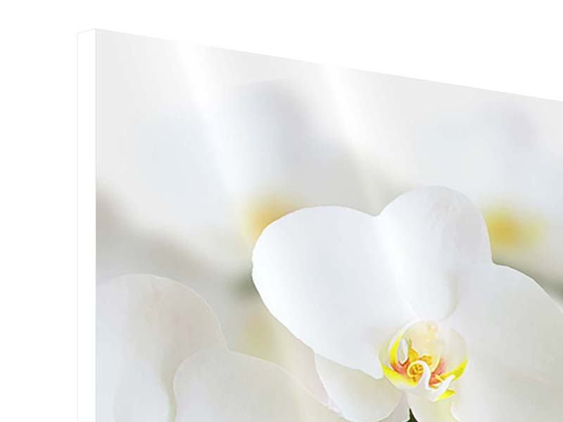Hartschaumbild 3-teilig modern Weisse Orchideen