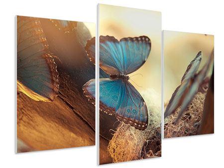 Hartschaumbild 3-teilig modern Schmetterlinge