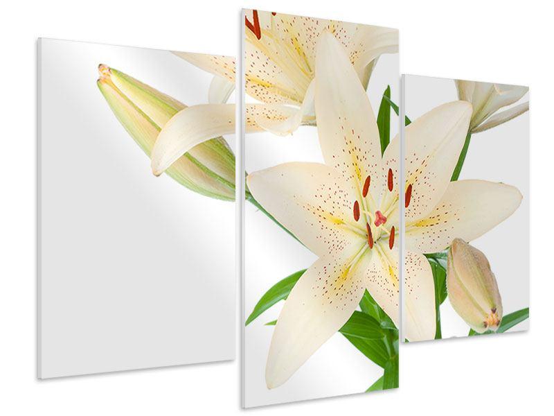 Hartschaumbild 3-teilig modern Weisser Lilienstrauch