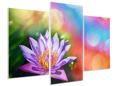 Hartschaumbild 3-teilig modern Colored Lotus