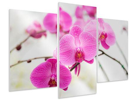Hartschaumbild 3-teilig modern Das Symbol der Orchidee