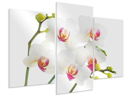 Hartschaumbild 3-teilig modern Orchideenliebe