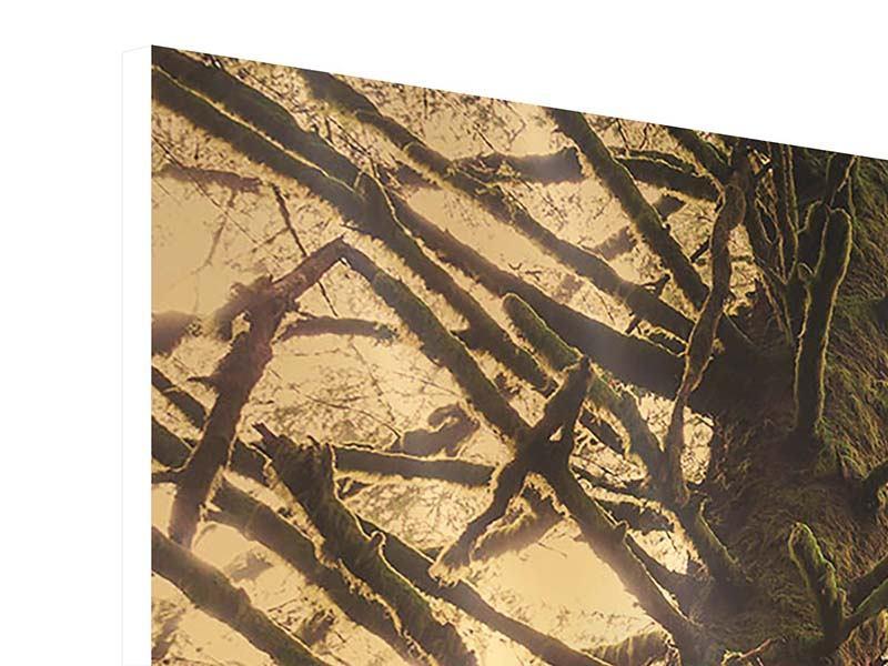 Hartschaumbild 3-teilig modern Sonnenuntergang im Dschungel