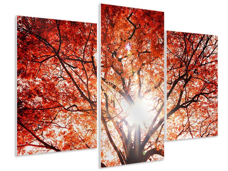 Hartschaumbild 3-teilig modern Herbstlicht