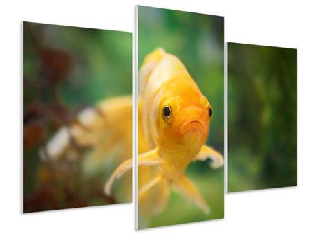Hartschaumbild 3-teilig modern Der Fisch