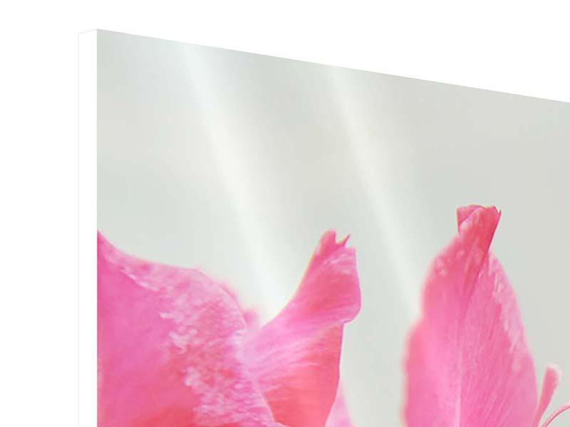 Hartschaumbild 3-teilig modern Gladiolen