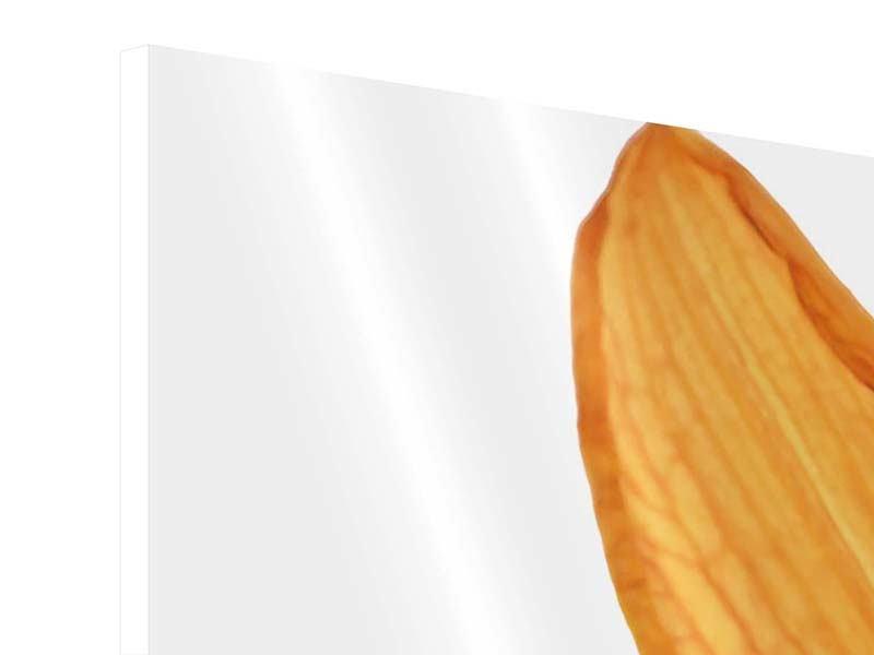 Hartschaumbild 3-teilig modern Die Tiger-Lilie