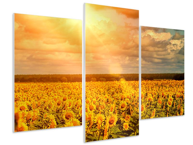 Hartschaumbild 3-teilig modern Goldenes Licht für Sonnenblumen