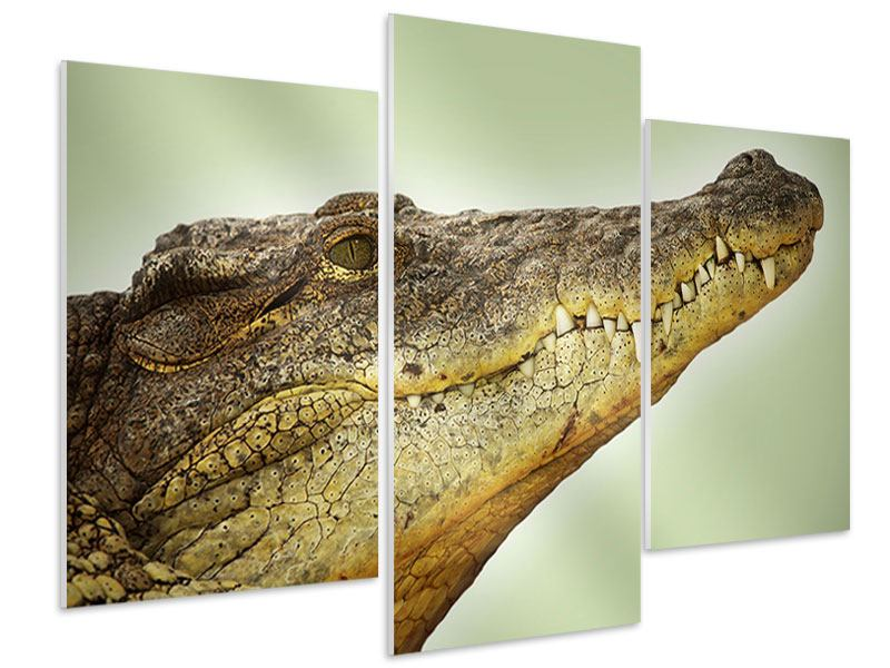 Hartschaumbild 3-teilig modern Close Up Alligator
