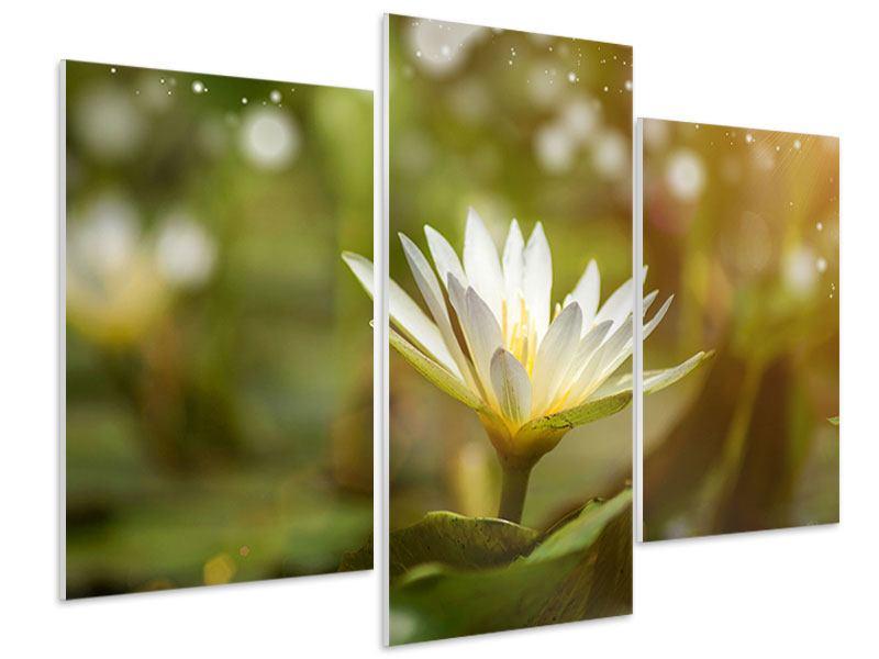 Hartschaumbild 3-teilig modern Lilien-Lichtspiel