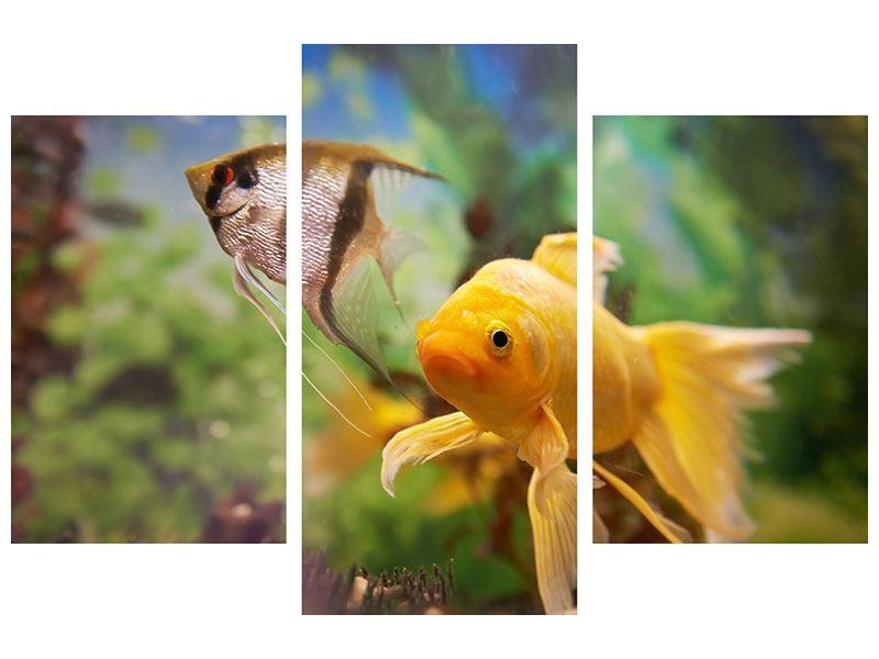 Hartschaumbild 3-teilig modern Bunte Fische