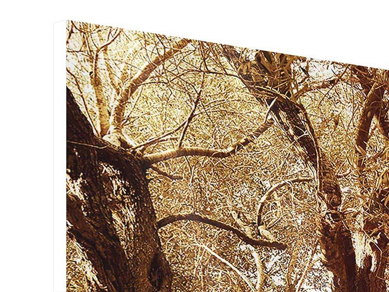 Hartschaumbild 3-teilig modern Olivenbäume im Herbstlicht