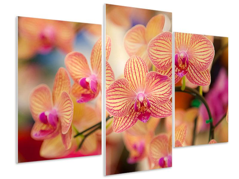 Hartschaumbild 3-teilig modern Exotische Orchideen