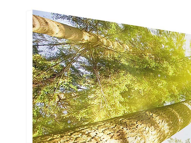 Hartschaumbild 3-teilig modern Baumkronen in der Sonne