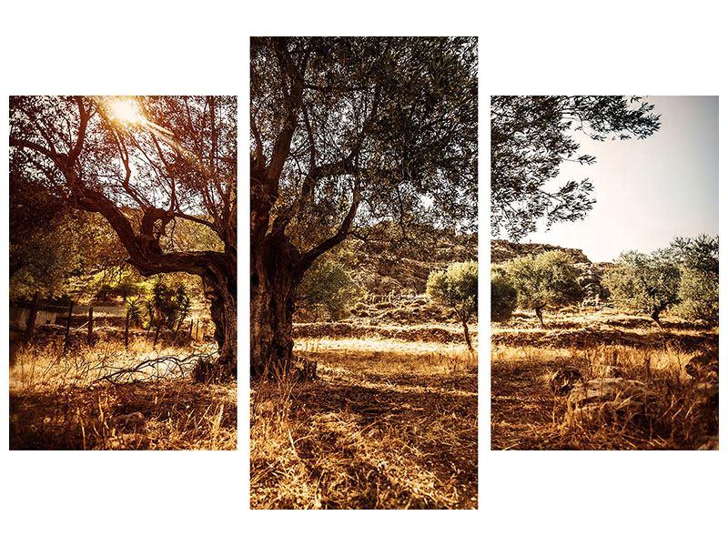 Hartschaumbild 3-teilig modern Olivenhain