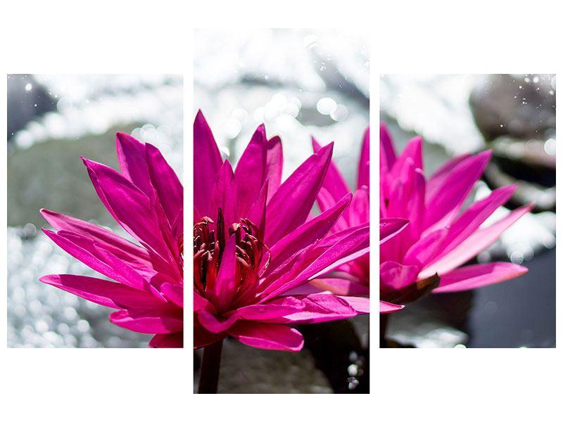 Hartschaumbild 3-teilig modern Seerosenduo in Pink