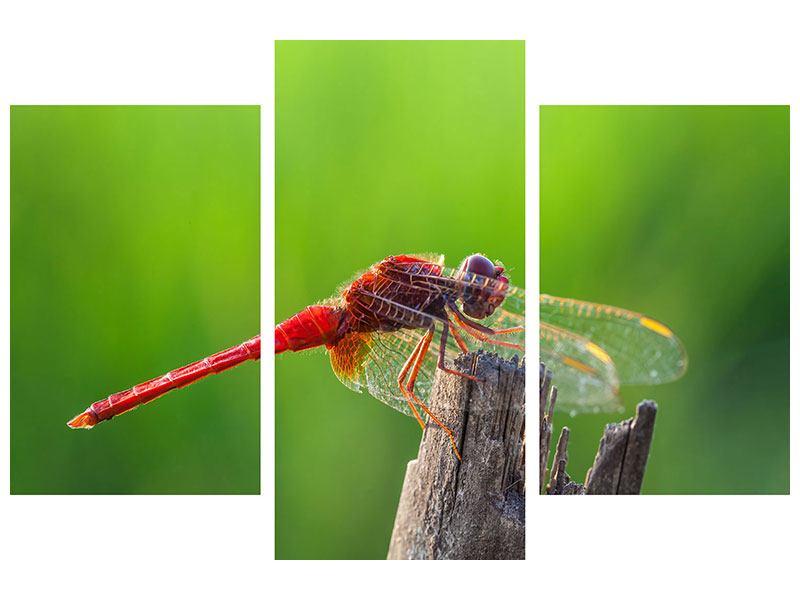 Hartschaumbild 3-teilig modern Libelle XXL