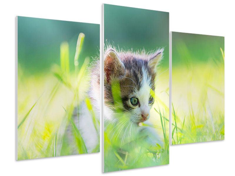Hartschaumbild 3-teilig modern Kitten