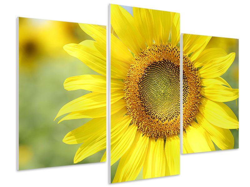 Hartschaumbild 3-teilig modern Die Blume der Sonne