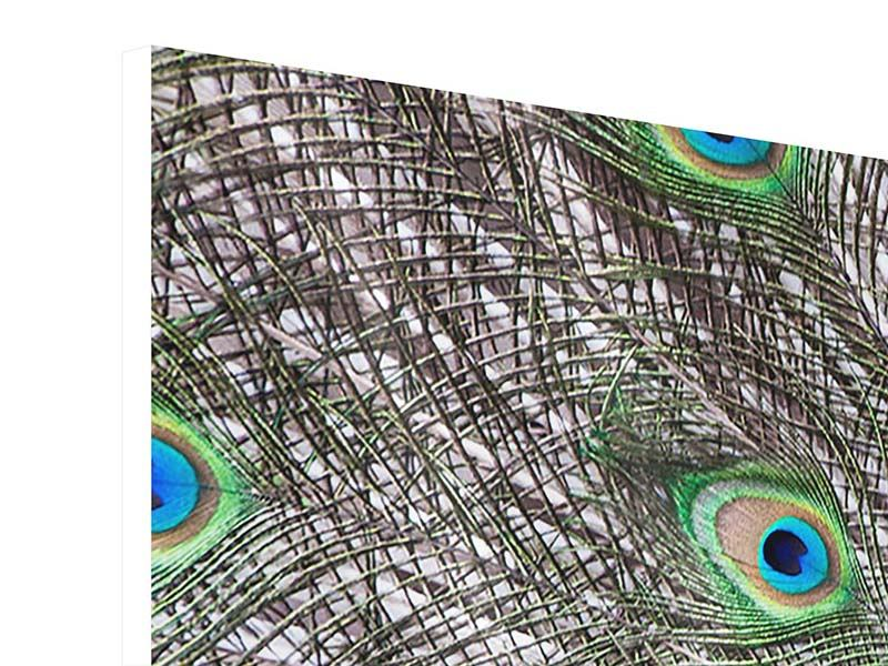 Hartschaumbild 3-teilig modern Blauer Pfau