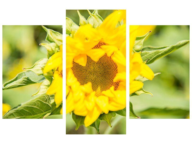Hartschaumbild 3-teilig modern Wilde Sonnenblume