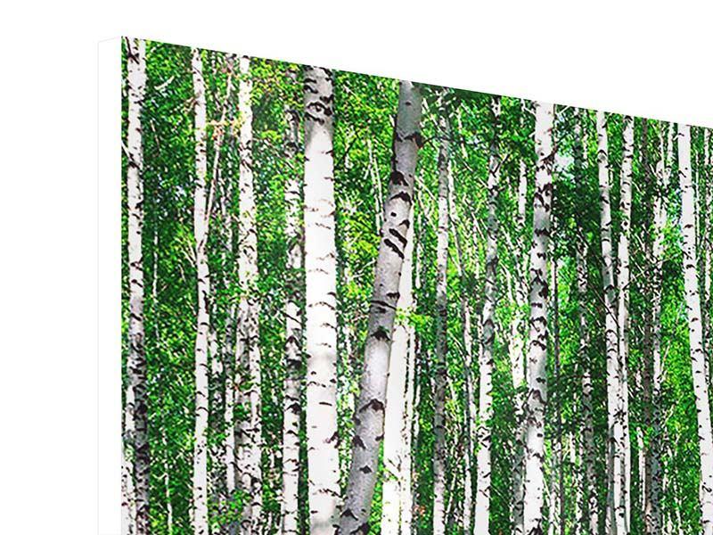 Hartschaumbild 3-teilig modern Sommerlicher Birkenwald