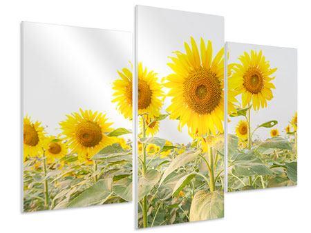Hartschaumbild 3-teilig modern Das Sonnenblumenfeld