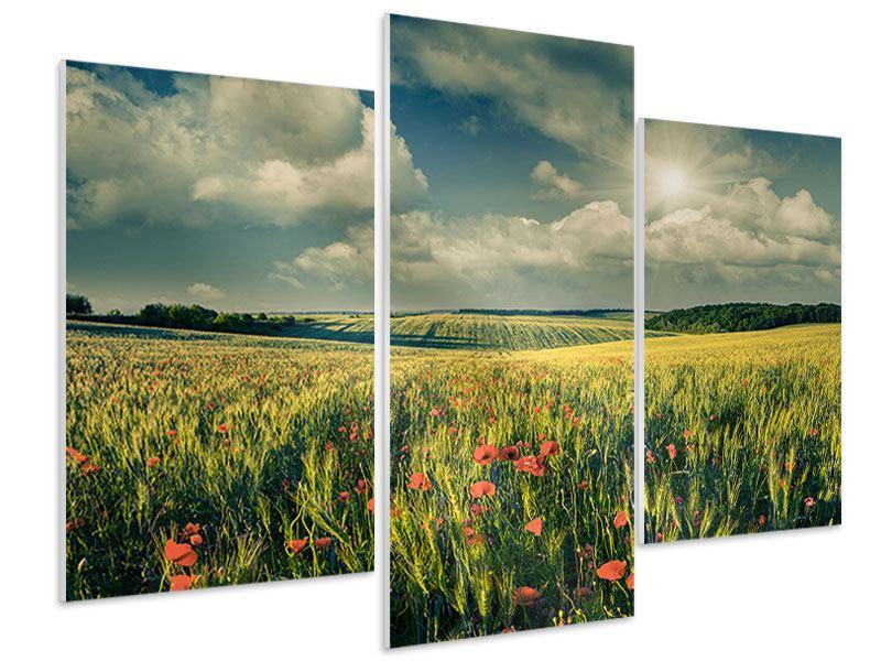 Hartschaumbild 3-teilig modern Der Mohn im Weizenfeld