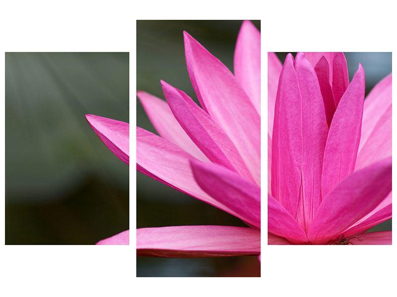 Hartschaumbild 3-teilig modern XXL Seerose in Pink