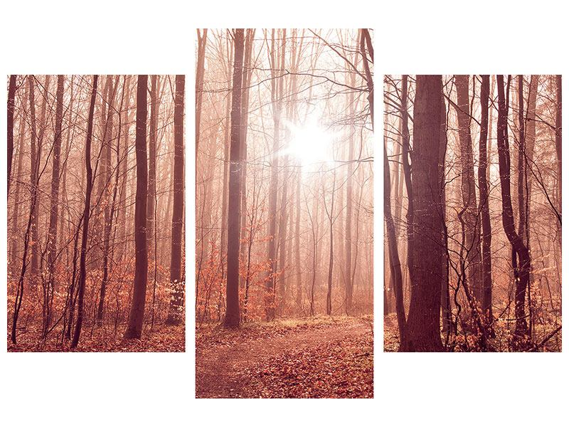 Hartschaumbild 3-teilig modern Sonnenuntergang im Herbstwald