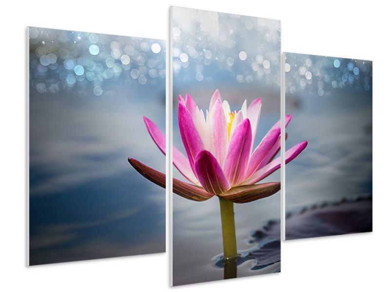 Hartschaumbild 3-teilig modern Lotus im Morgentau