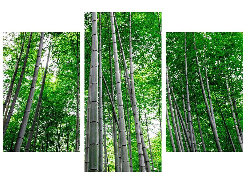 Hartschaumbild 3-teilig modern Bambuswald